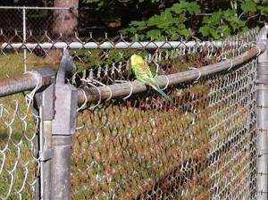 imagebird